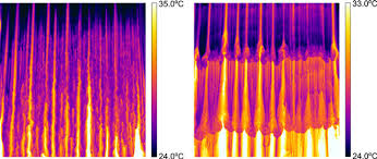 Thermal Imaging Used At Imperial College